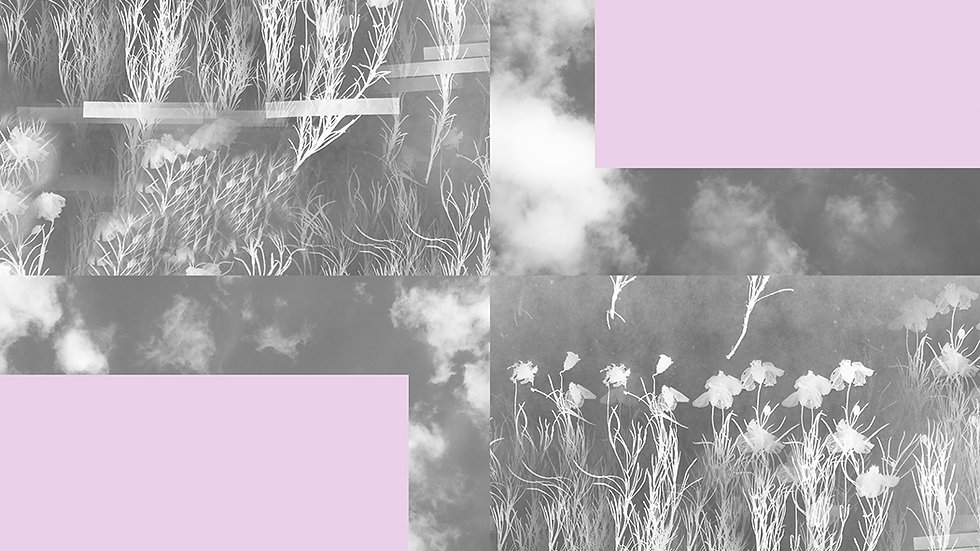 Pink block botanicals