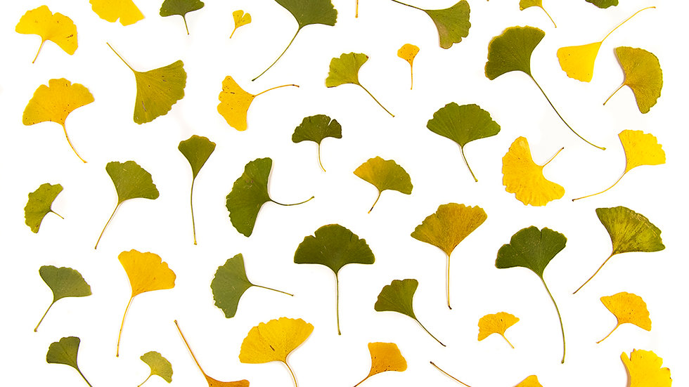 Ginkgo's for Lora
