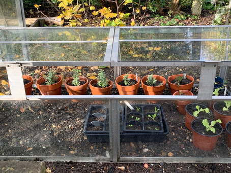 Cold Play: Cool things about cold frames