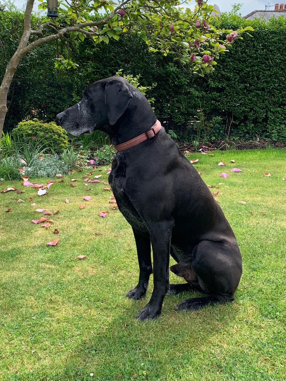 Dog wee lawn