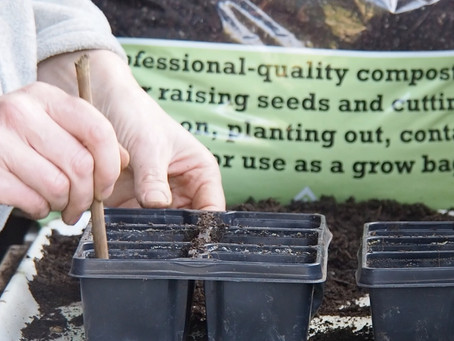 Things to do in the garden during lockdown, day 12: get sowing