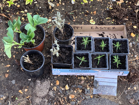 Things to do in the garden during lockdown day 20: give your spare cuttings as an easter gift
