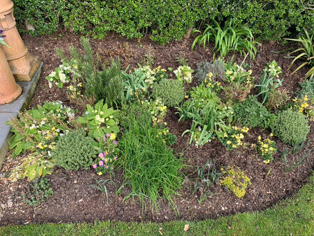 Things to do in the garden during lockdown, day 10: photograph your flower beds