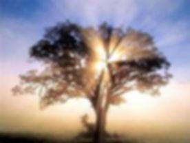 tree of light.jpg