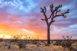 Colors of the Mojave
