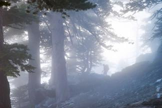 Foggy Forest Trek