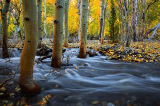 Essence of Autumn