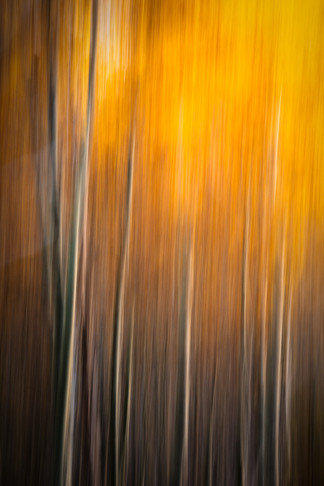 Aspens Abstracted