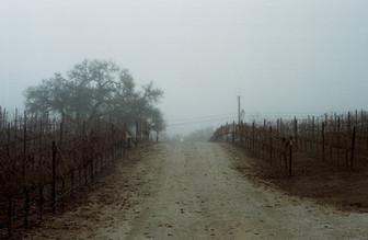 Spooky Vineyard