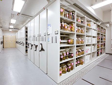 museum storage2.jpg