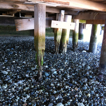"""""""The cottage, and especially its pilings, were in serious states of disrepair."""""""