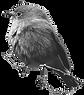 Bird Edit.png
