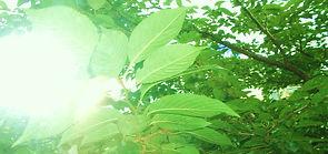 逆光緑 - コピー.JPG