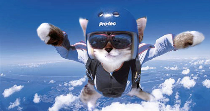 Cat-Skydiving.jpg