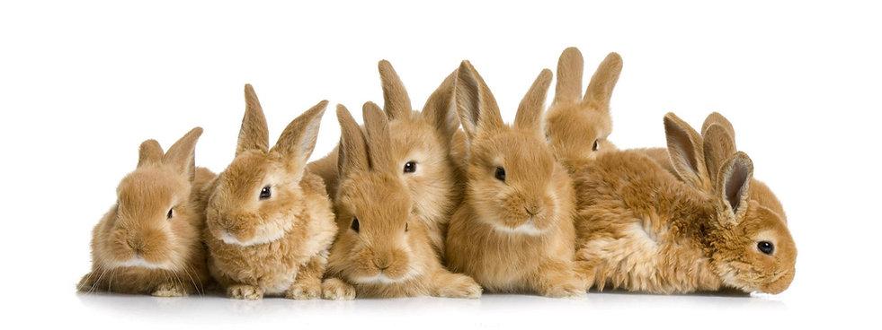 Group_of_Rabbit_Wallpaper good.jpg