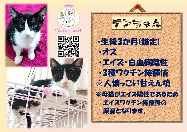 テンちゃん2.jpg