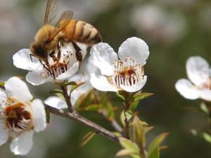 10 Proprietà benefiche del miele