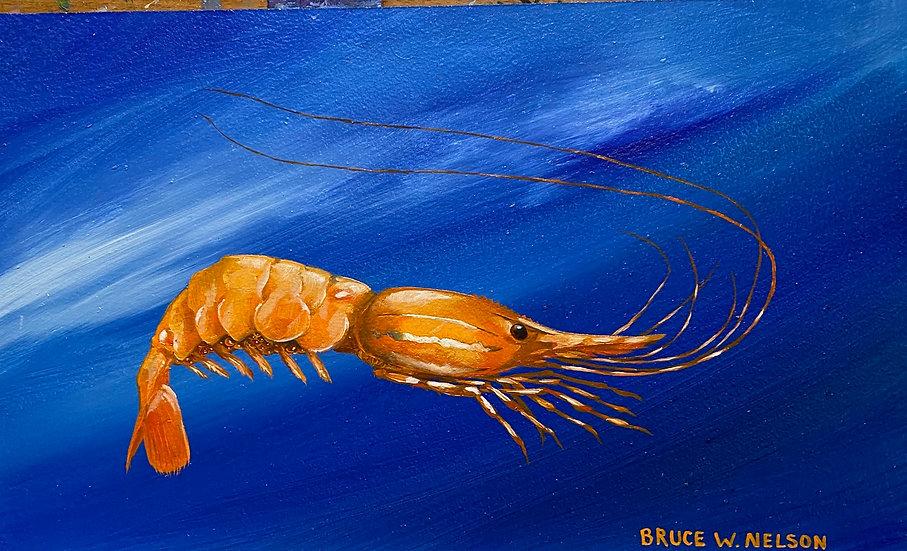 Spot prawn by Bruce Nelson