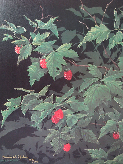 Salmonberry by Bruce Nelson