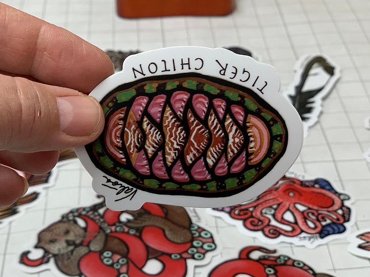 """Tiger  Chiton"" Sticker by Valisa Higman"