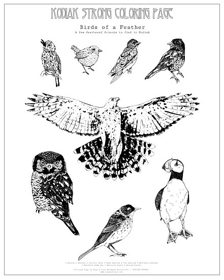 """20x16 coloring page """"Birds of Kodiak"""" by Amarie Young"""