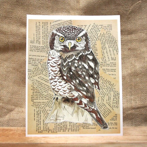 """Northern Hawk Owl"" by Amarie Young"
