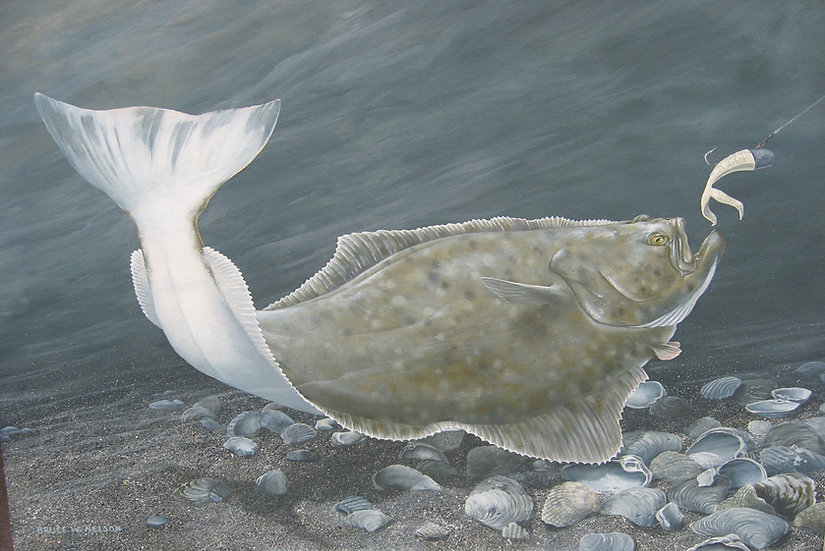 Pacific Halibut by Bruce Nelson