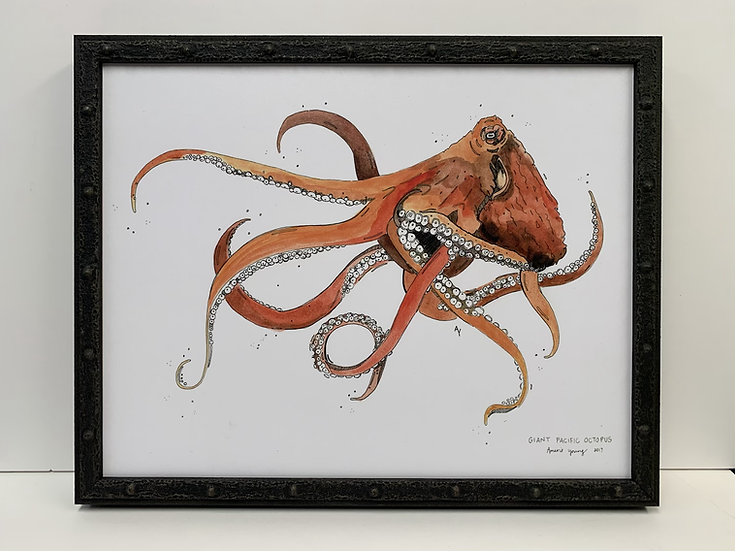 Giant Pacific Octopus by Amarie Young