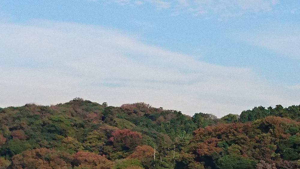 鎌倉 紅葉 2017