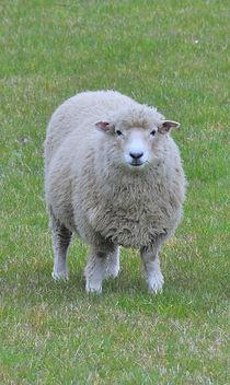 シャポーチホレーヌ鎌倉ハンドフェルトの帽子ニュージーランドの羊