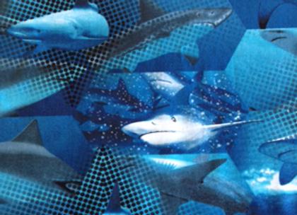 Heavy Metal Sharks Blue
