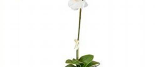 Orquídea Blanca c/maceta negra 60 cm