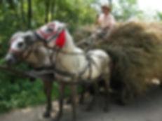 0horses-carts.jpg