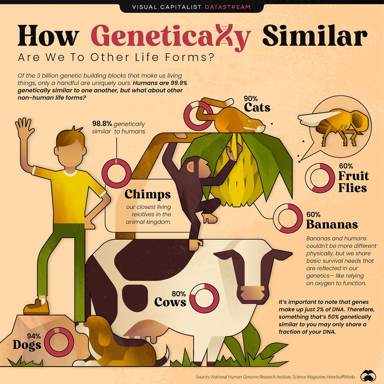 0Genetic-Similarities-MAIN-03.jpeg