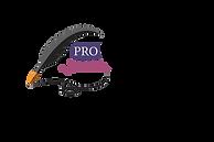 pro writing skills training logo