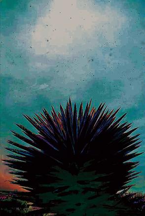 Old Explosive Yucca.tif