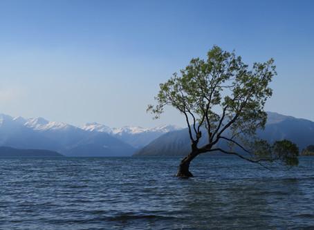 Lake Matheson and Wanaka