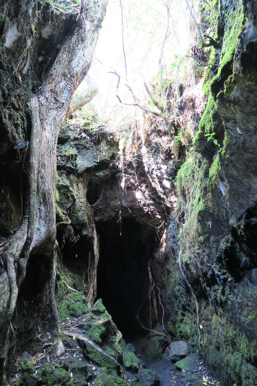 Lava caves, Rangitoto