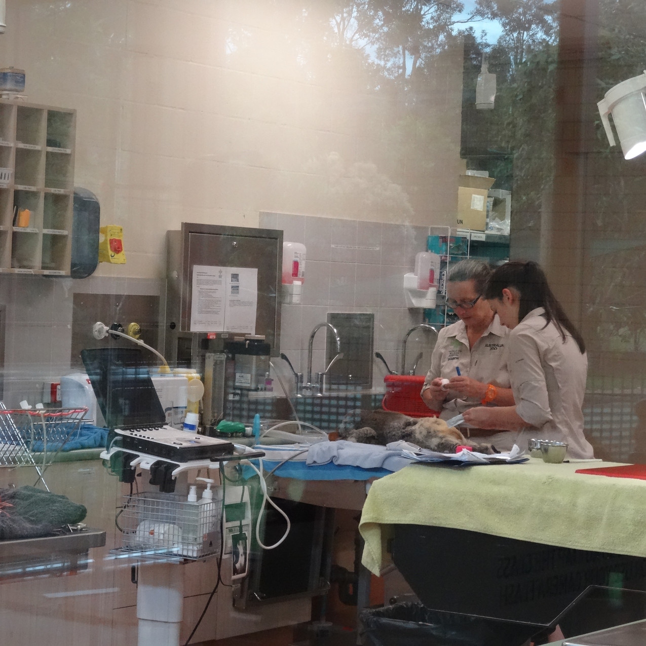 Animal hospital at Australia Zoo