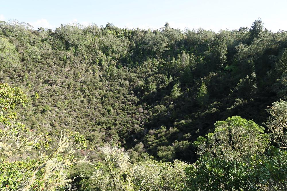 Rangitoto's crater