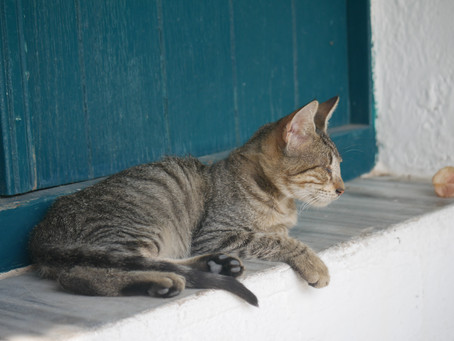 Greece | Cats Of Nisyros