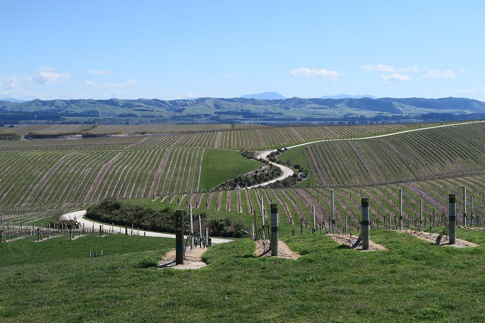 Yealand's vineyards