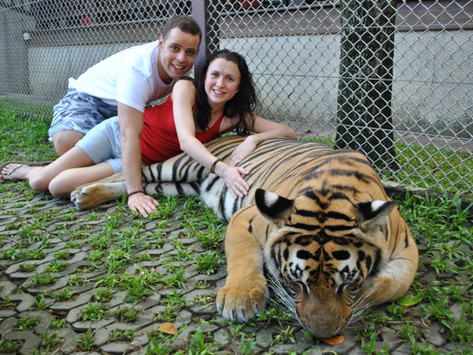Temples and Tigers in Chiang Mai