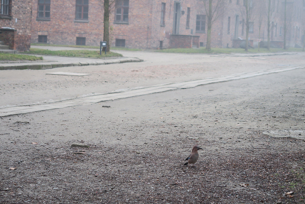 Auschwitz- they say birds don't even fly near the site.