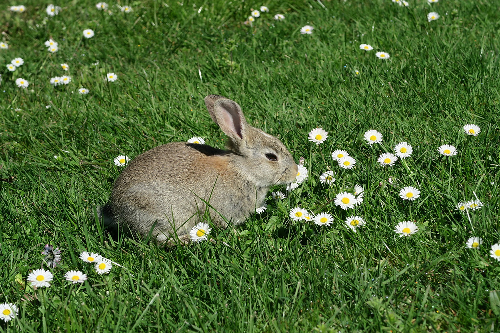 Bunny at campsite