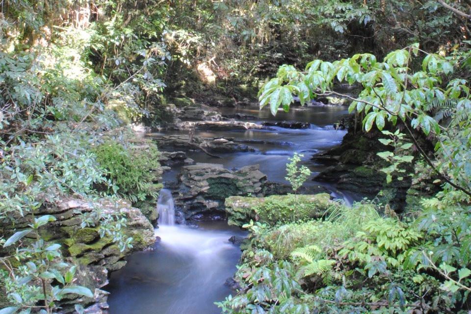 Ruakuri reserve- Waitomo