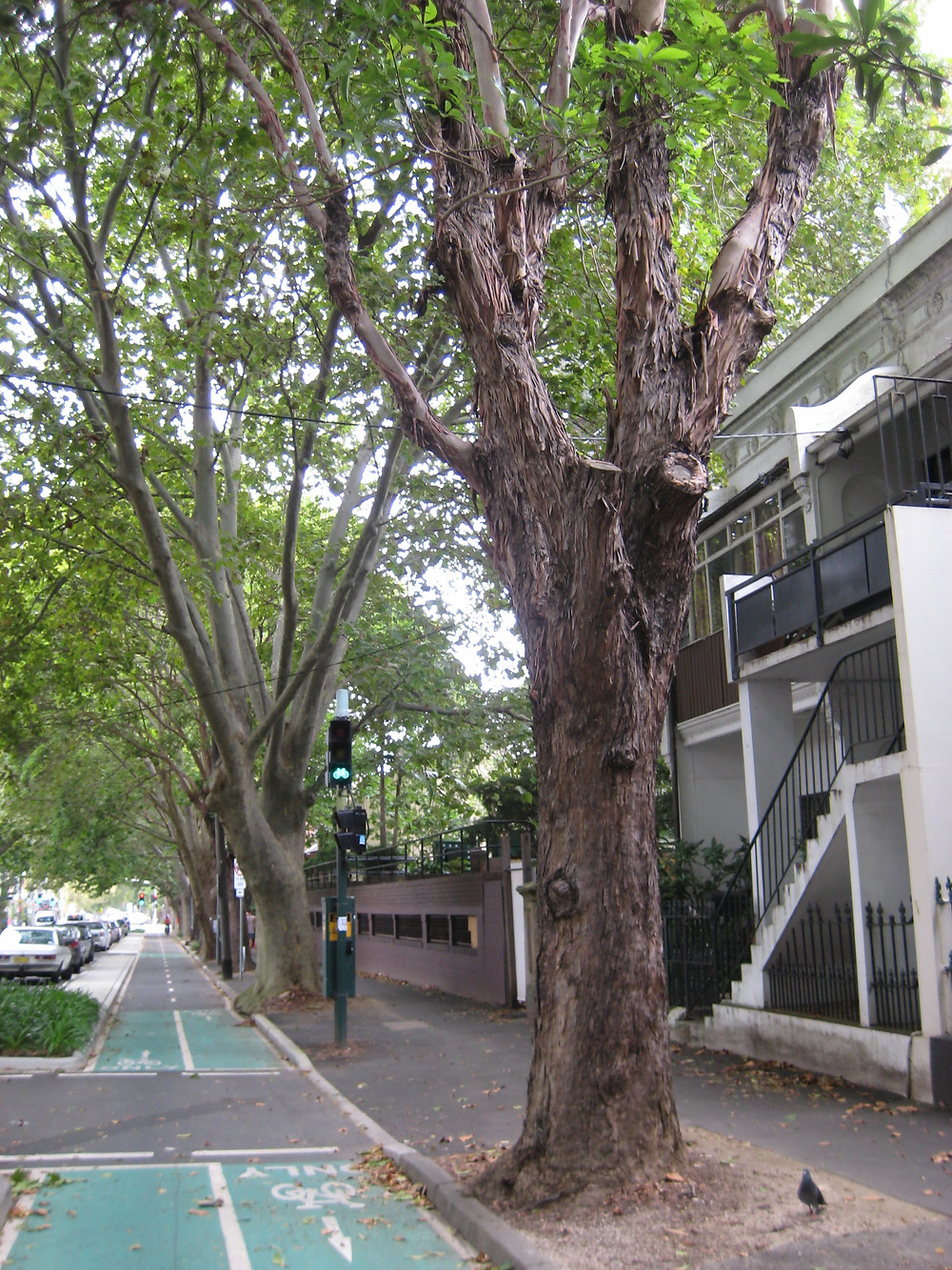 Sydney's cycle lanes