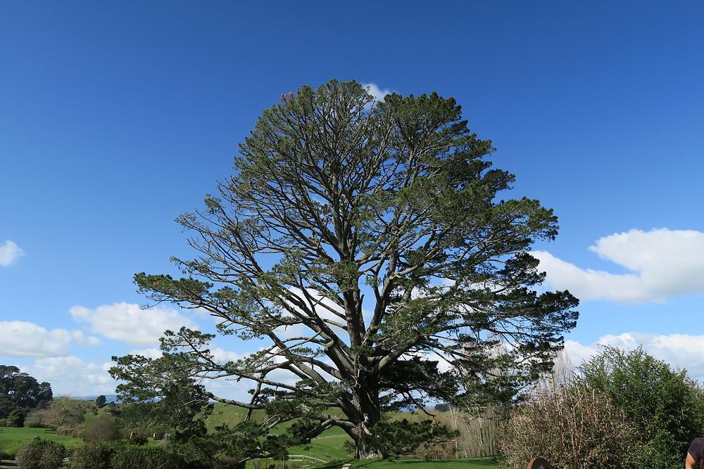 Hobbiton-party tree