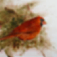 180039 Foraging - Cardinal.JPG