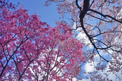 2019/03/24 新宿御苑